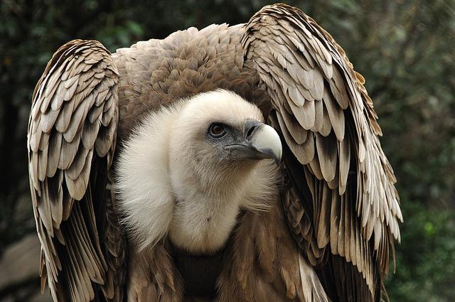 http://www.myplanet-ua.com/wp-content/uploads/2013/06/vulture.jpg