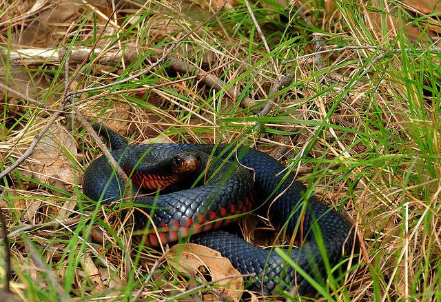 геккон змея фото