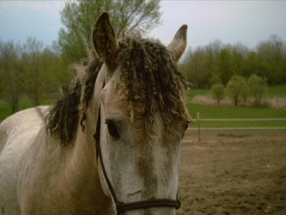 Башкирская лошадка