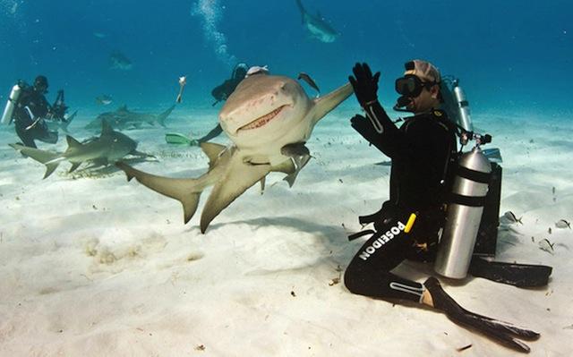 Смішні фотографії тварин, зроблені в потрібний момент - 8
