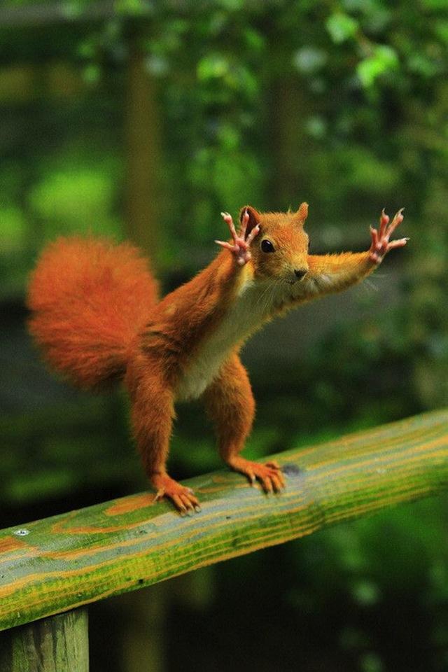 Смішні фотографії тварин, зроблені в потрібний момент - 6