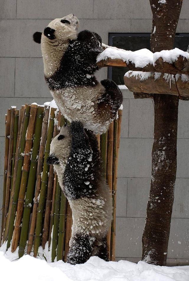 Смішні фотографії тварин, зроблені в потрібний момент - 5