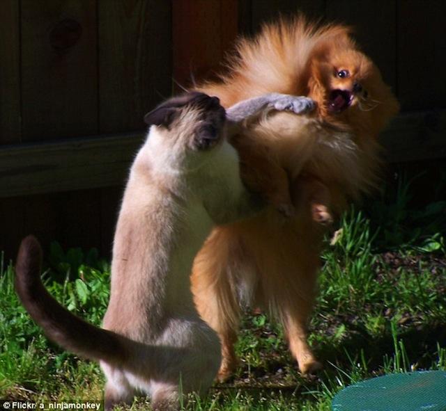 Смішні фотографії тварин, зроблені в потрібний момент - 3