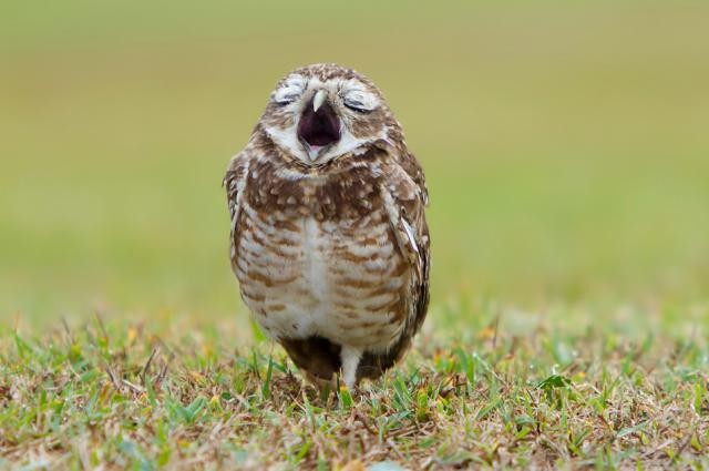 Смішні фотографії тварин, зроблені в потрібний момент - 1