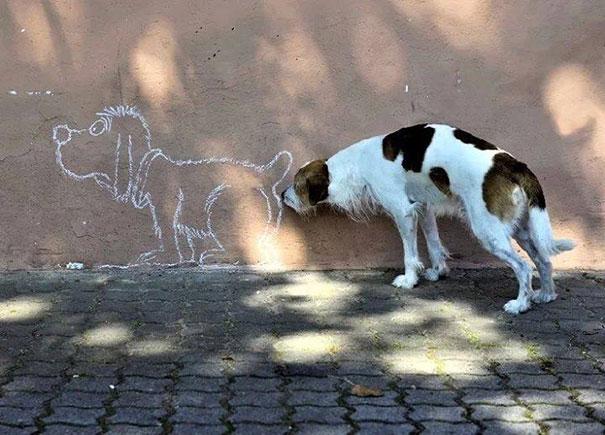 Смішні фотографії тварин, зроблені в потрібний момент - 12