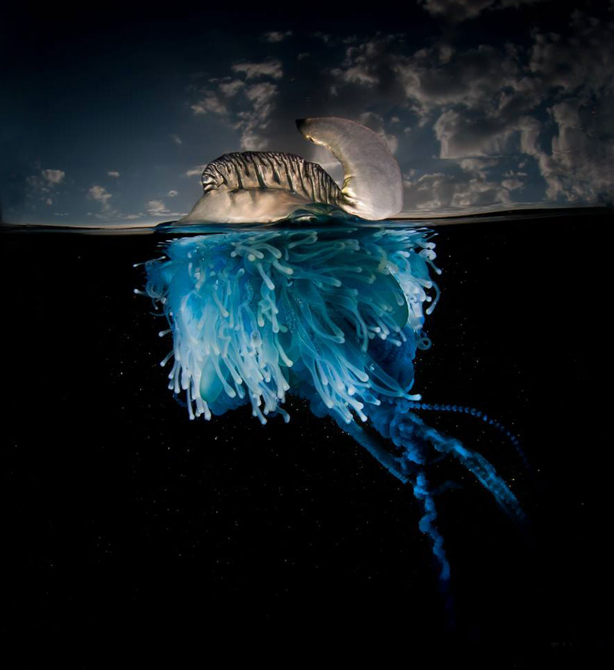 A-Parallel-Universe-My-Half-Underwater-Images-Show-What-Hides-Beneath-The-Waves2__880