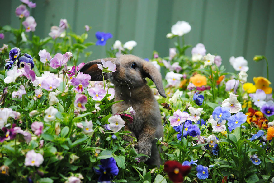 http://www.myplanet-ua.com/wp-content/uploads/2016/01/animals-smelling-flowers-27__880.jpg