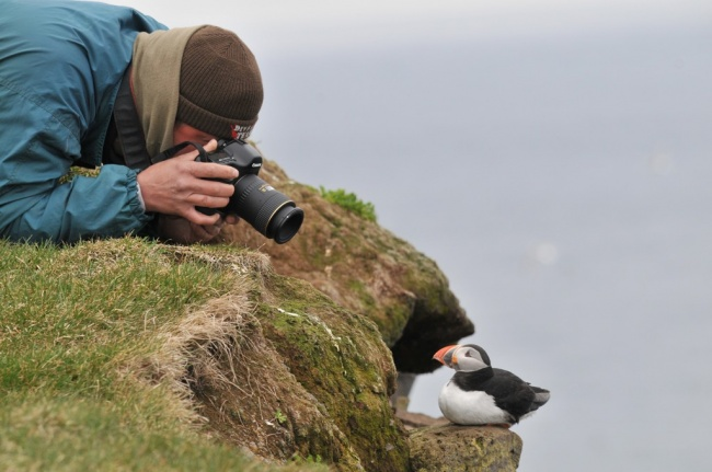 272955-650-1451511829-photographer_Puffin_Iceland-1024x680-1