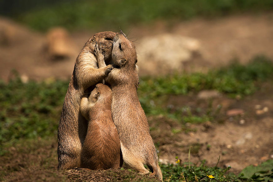 cute-animals-kissing-valentines-day-25__880