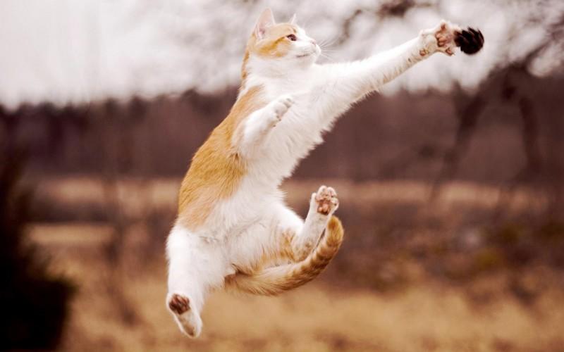 kitties03