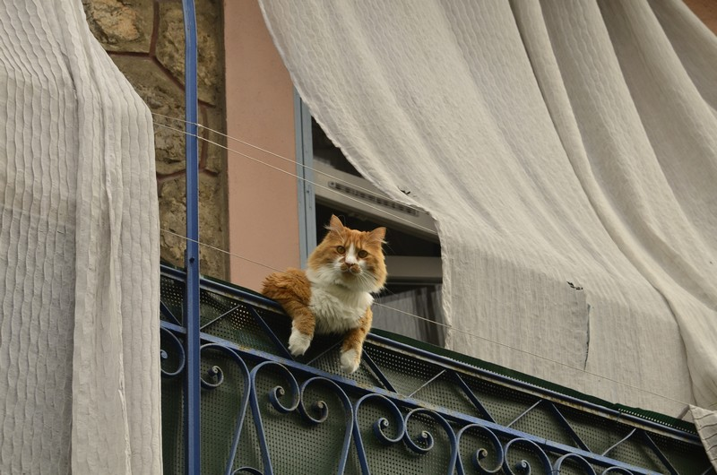 kitties05