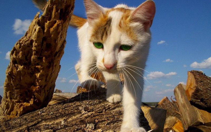 kitties19
