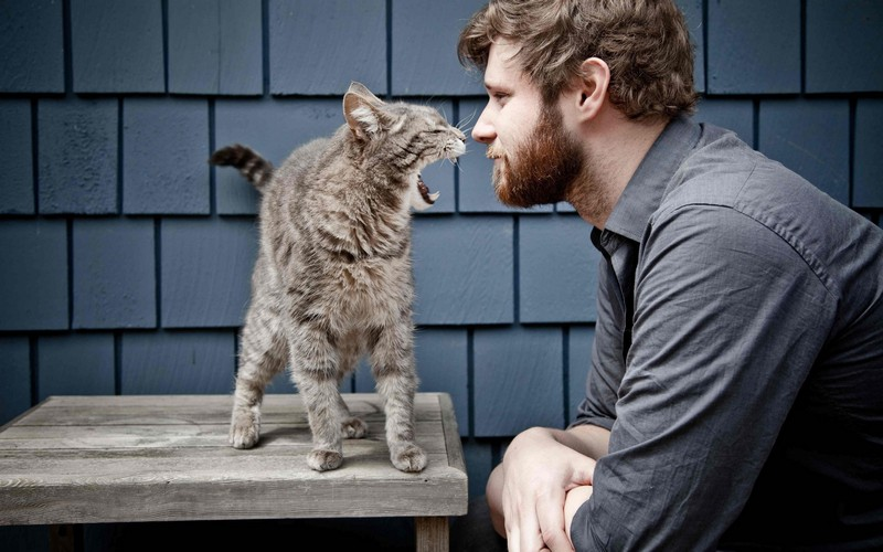 kitties24