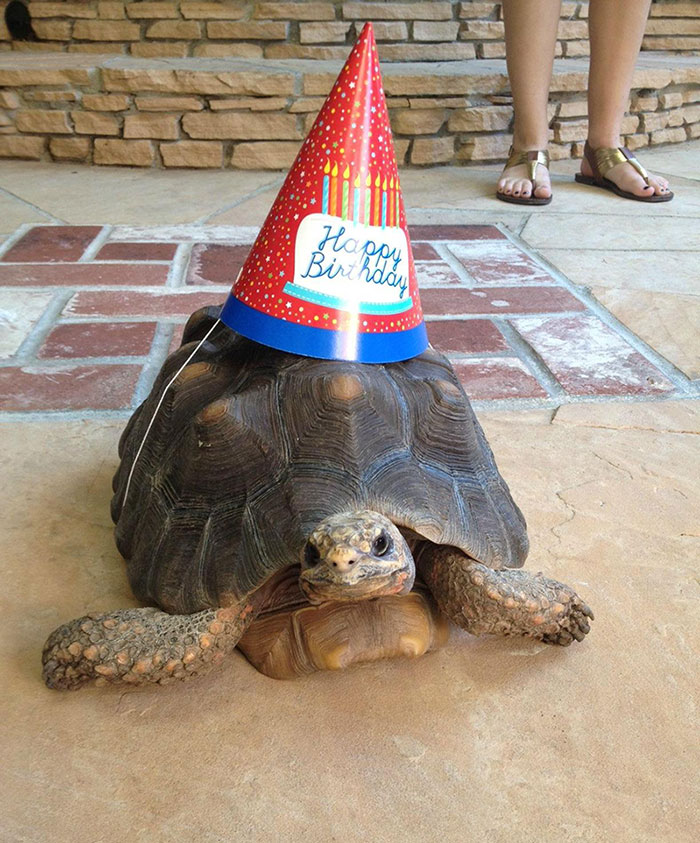 Pets-That-Have-Better-Birthday-Parties-Than-You-5706bc167fc1b__700