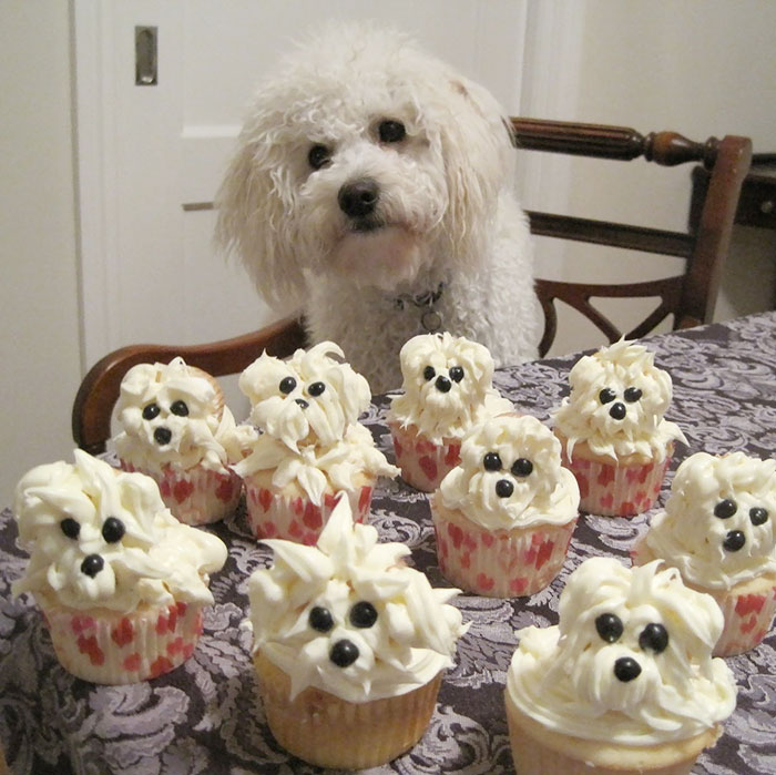 Pets-That-Have-Better-Birthday-Parties-Than-You-5706bda45de6e__700