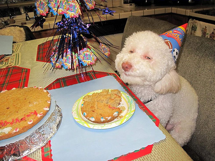 pets-birthday-parties-17-570697596e700__700