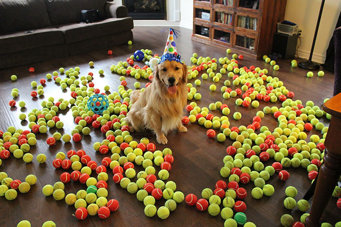 pets-that-have-better-birthday-parties-than-you-45-570e06843b9bf__700