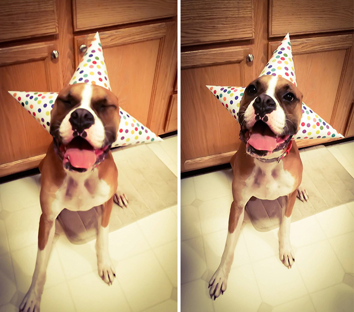 pets-that-have-better-birthday-parties-than-you-61-570f49e61d309__700
