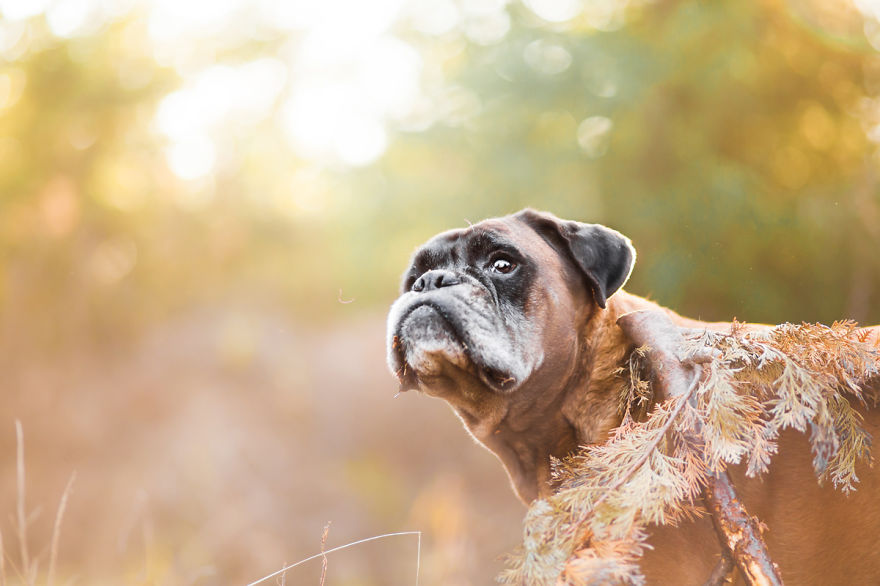 photograph_the_dog_emotion_that_you_see_in_their_eyes_01