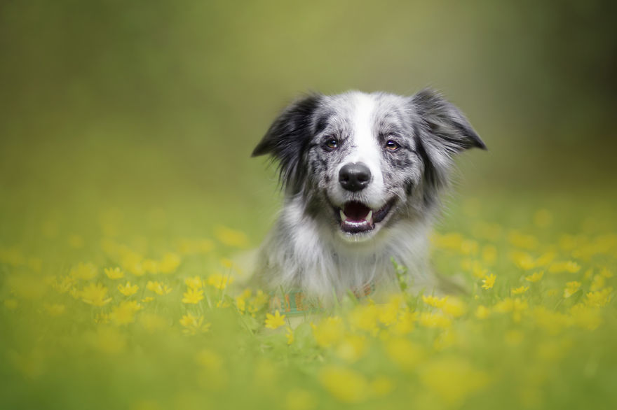 photograph_the_dog_emotion_that_you_see_in_their_eyes_05