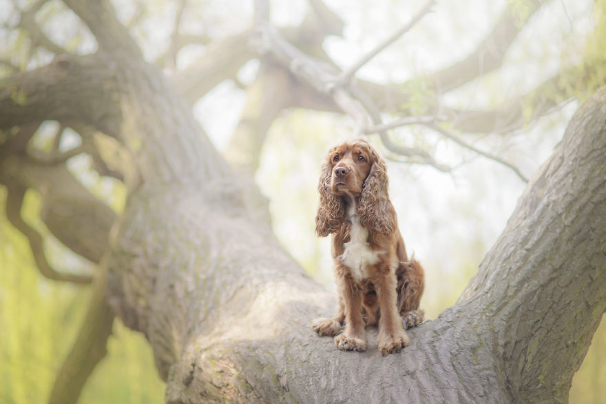 photograph_the_dog_emotion_that_you_see_in_their_eyes_07