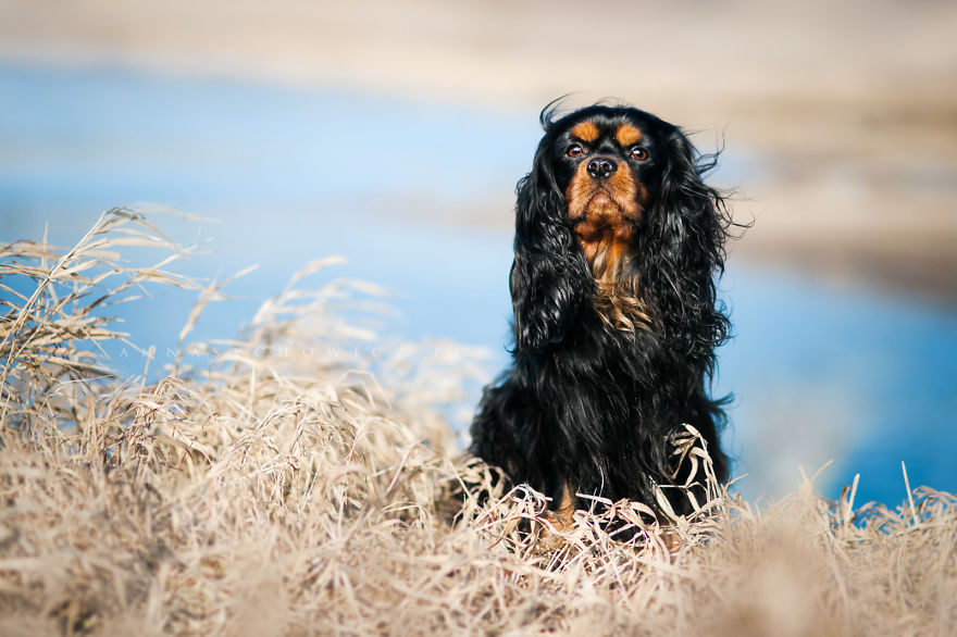photograph_the_dog_emotion_that_you_see_in_their_eyes_12