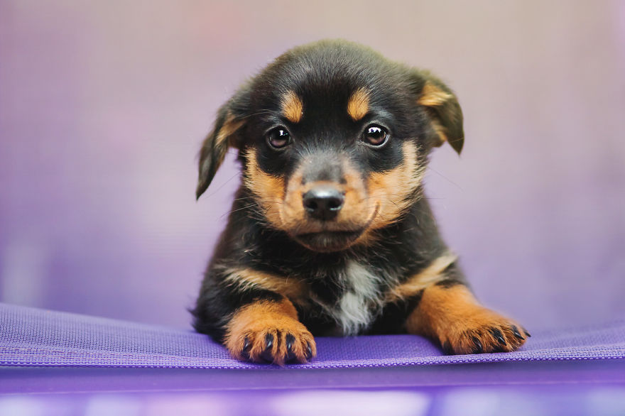 photograph_the_dog_emotion_that_you_see_in_their_eyes_14