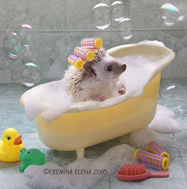 hedgehogs-photography-elena-eremina-66-57b18c5ba43f5__605