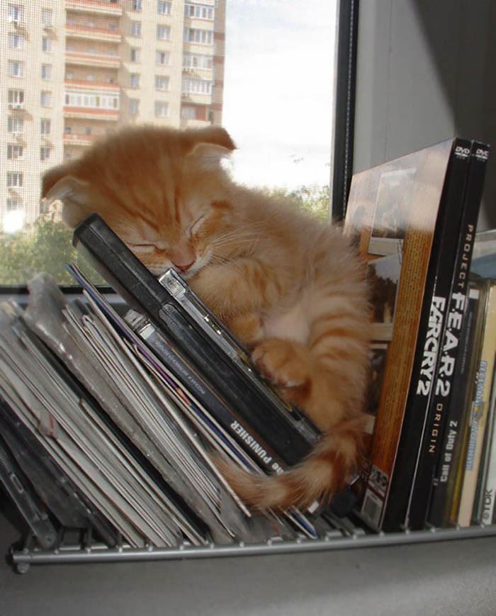 Кошки спят где угодно и когда хотят