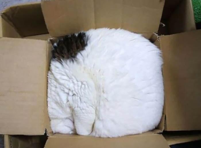 Картинки по запросу фотографий, которые доказывают, что кошки могут спать где угодно