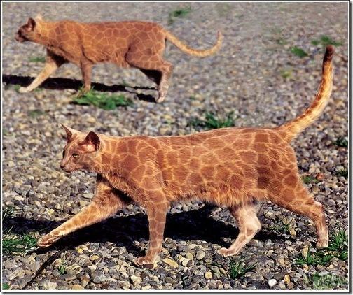 paintcat-15