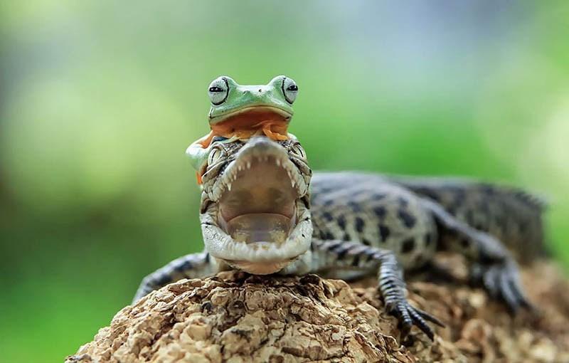 frog-photography-tanto-yensen-vinegret-14