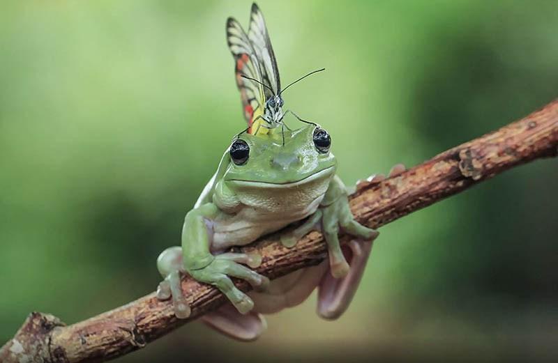 frog-photography-tanto-yensen-vinegret-15