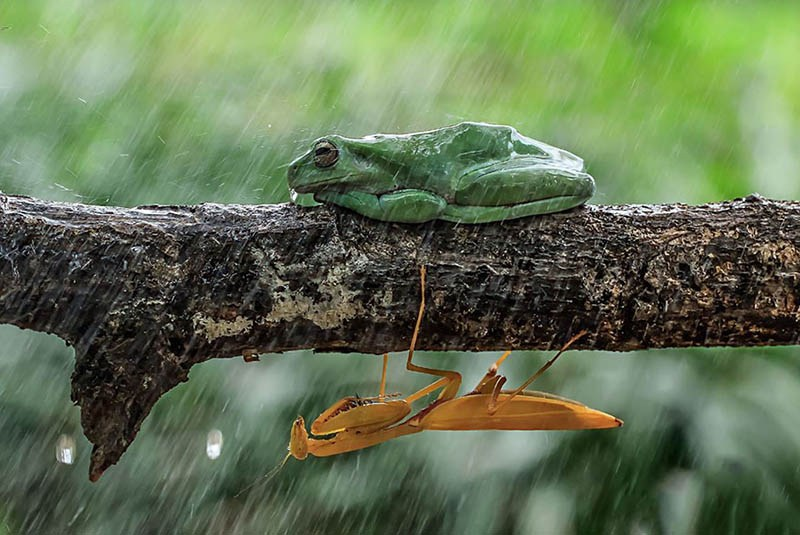 frog-photography-tanto-yensen-vinegret-2