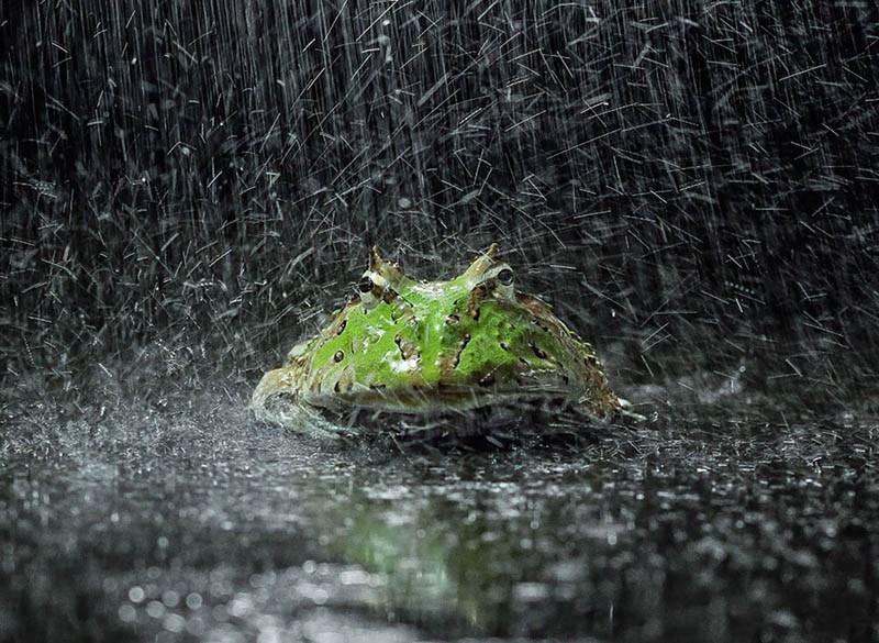 frog-photography-tanto-yensen-vinegret-20