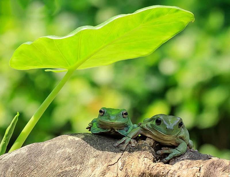 frog-photography-tanto-yensen-vinegret-3