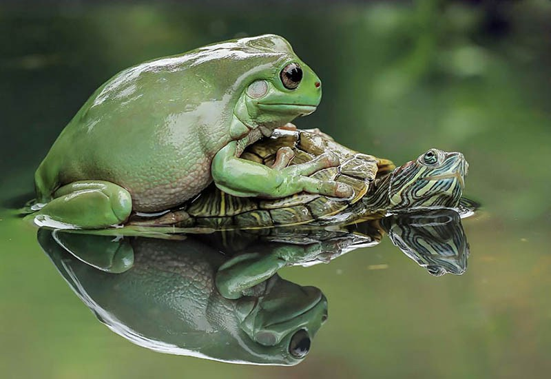 frog-photography-tanto-yensen-vinegret-4