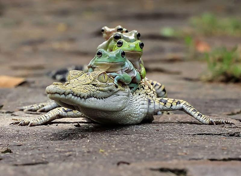 frog-photography-tanto-yensen-vinegret-5