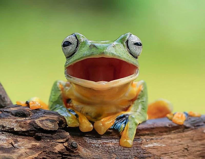frog-photography-tanto-yensen-vinegret-6