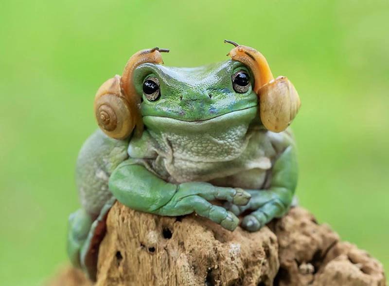 frog-photography-tanto-yensen-vinegret-7