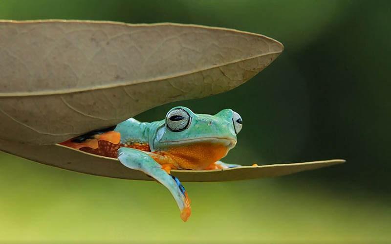 frog-photography-tanto-yensen-vinegret-8