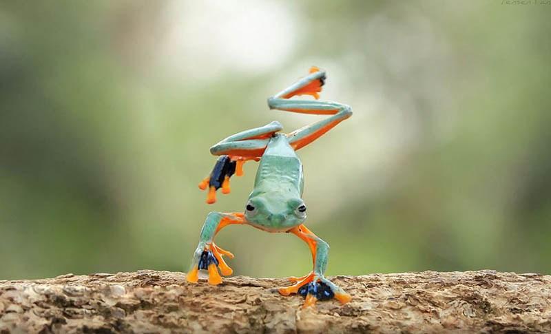 frog-photography-tanto-yensen-vinegret-9