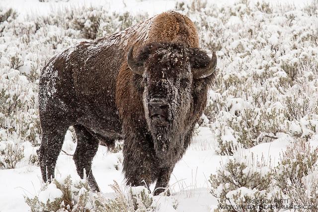 animals in winter2