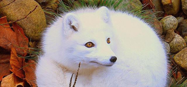 Животный мир Урала Удивительный Мир Животных