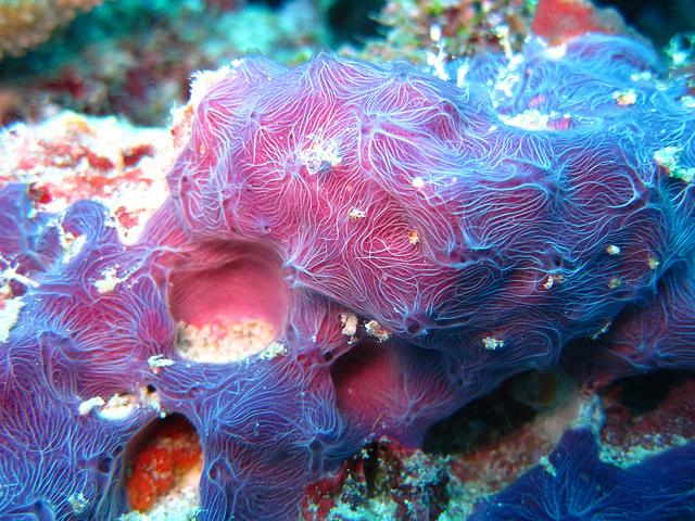 sponge ocean