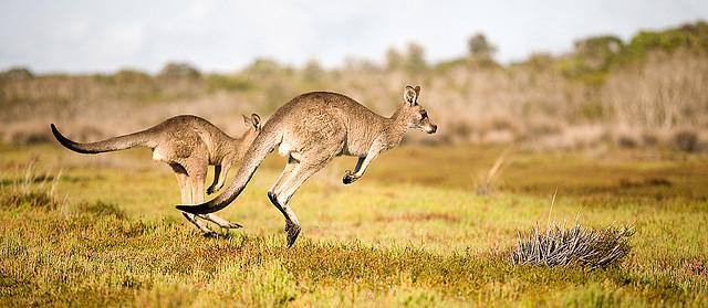 Животный мир Австралии - Удивительный Мир Животных 47e48877aacd5