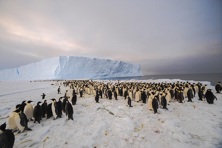 9,000-strong emperor penguin colony on Princess Ragnhild Coast