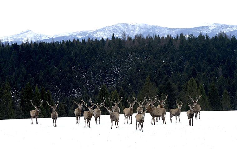 Deer breeding farm in Poland