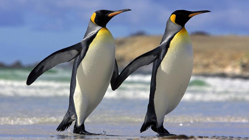 Разнообразие животного мира Удивительный Мир Животных Пингвины