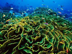 phoenix-islands-reef_28018_600x450